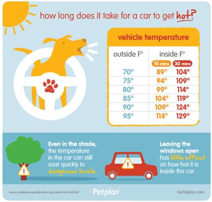 Pet-plan-car-infographic